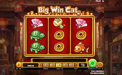 Big Win Cat Casinohuoneella